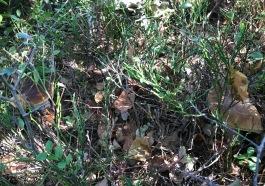 grzybobranie-baranow-sandomierski-5