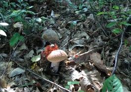 grzybobranie-sandomierz-1