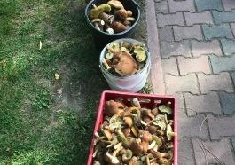 grzybobranie-sandomierz-3